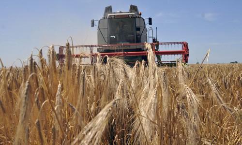 Koronavírus - Idénymunka kereső portállal segíti a mezőgazdasági munkavállalást az agrártárca